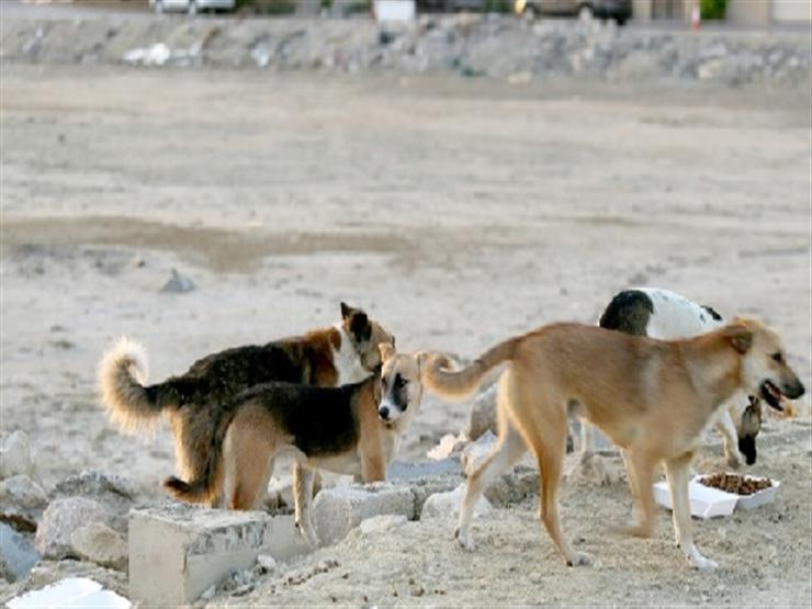 بينهم 4 أطفال.. كلب ضال يعقر 7 في مصيف جمصة بالدقهلية