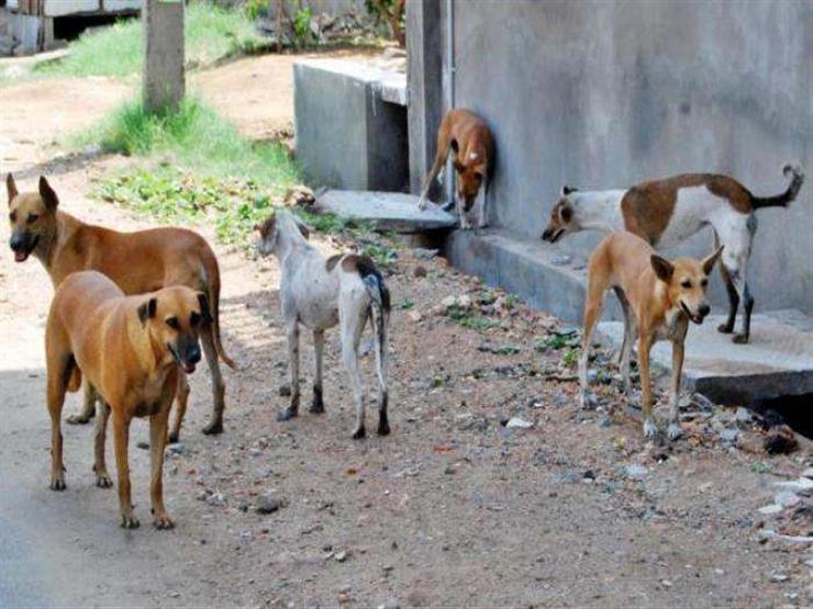 """""""مش مسؤوليتنا لوحدنا"""".. """"الزراعة"""": زيادة الوعي في التعامل مع الكلاب ضرورة"""