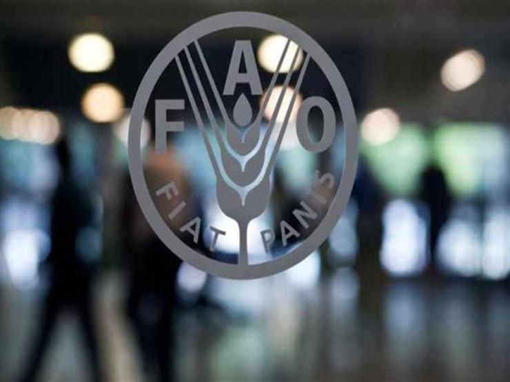 فاو: أسعار الغذاء العالمية ترتفع للمرة الأولى في 5 أشهر في أكتوبر الماضي