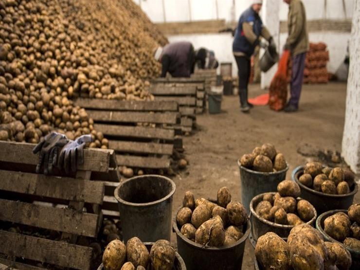 أسعار البطاطس تقفز بالتضخم السنوي إلى 17.5% في أكتوبر