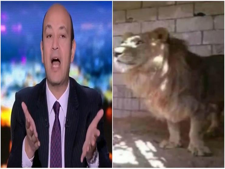 """""""أغرب من صفقة القرن"""".. عمرو أديب ساخرًا من واقعة """"أسد أسيوط"""""""