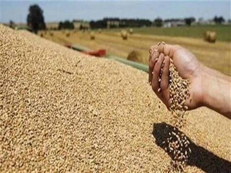 توريد 321 ألف طن قمح للصوامع في موسم الحصاد بالشرقية