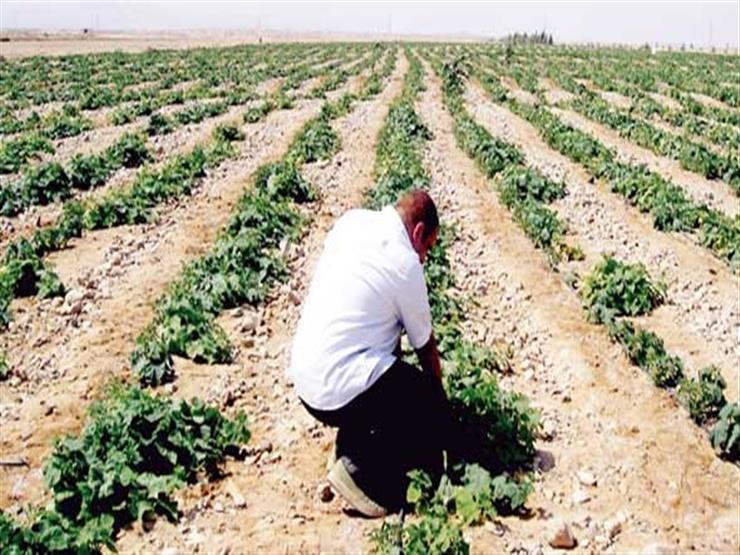 الأوقاف تتولى زراعة 20 ألف فدان بشرق العوينات في الوادي الجديد