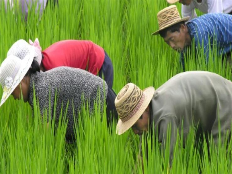 فاو: انخفاض الإنتاج الغذائي لكوريا الشمالية في 2018
