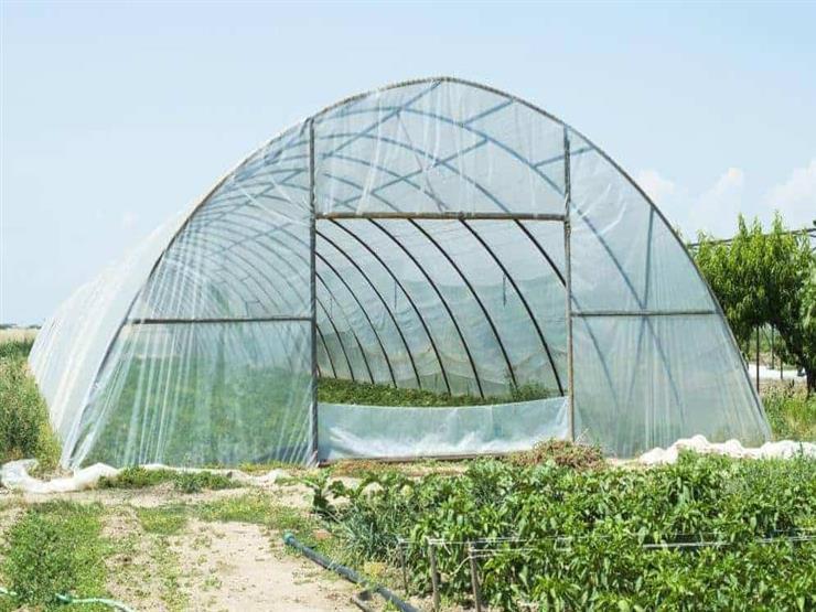 جهاز تنمية المشروعات الصغيرة: الصوب الزراعية تعظم الإنتاج وترشد المياه-فيديو