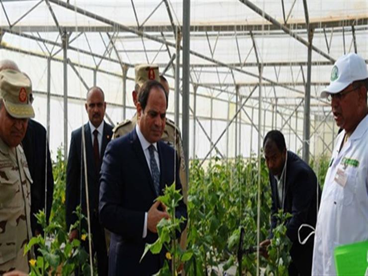 """شركة """"تكنو أجريكو"""" الإسبانية: مصر ستكون لاعبًا أساسيًا في مجال الإنتاج الزراعي"""