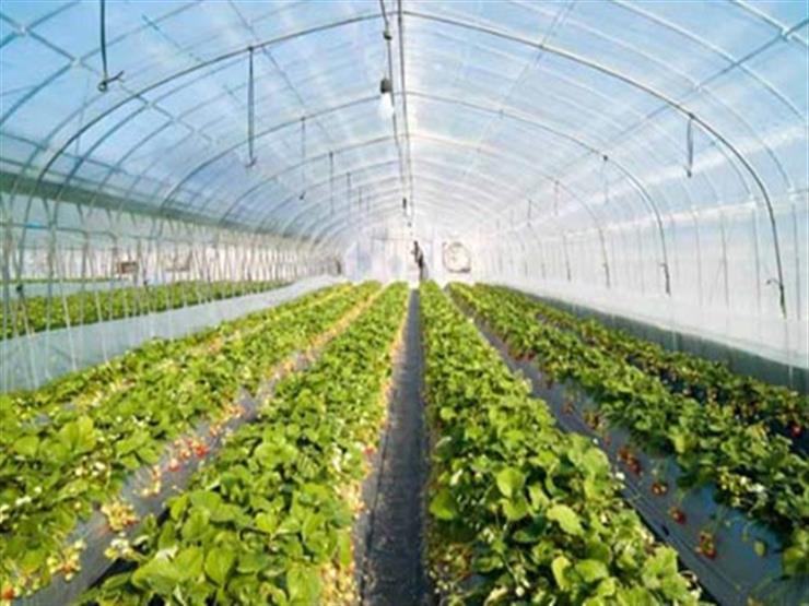 """""""فجر جديد"""".. فيلم تسجيلي عن المشروع القومي للصوب الزراعية"""