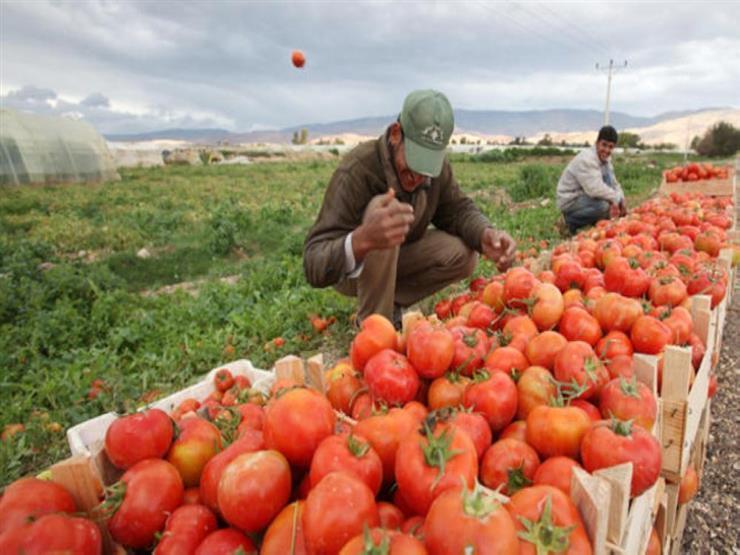 ارتفاع حصيلة صادرات 4 محاصيل.. وتجهيز سوق جديدة منتصف يوليو