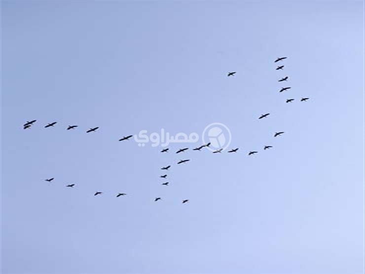 غدا.. جولة نيلية احتفالا باليوم العالمي للطيور المهاجرة