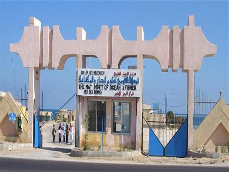 مؤتمر  أفريقيا للعلوم البحرية .. أكتوبر المقبل في شرم الشيخ ...مصراوى