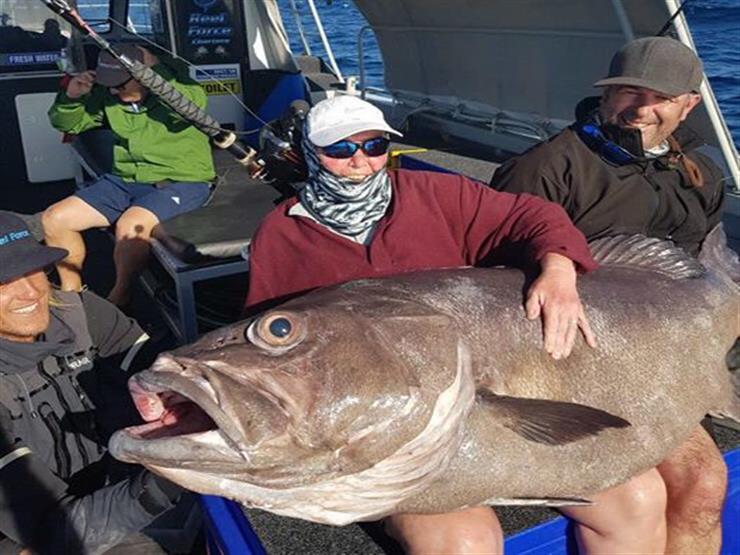 بالفيديو- سيدة تصطاد سمكة قاروص بحجم الأريكة