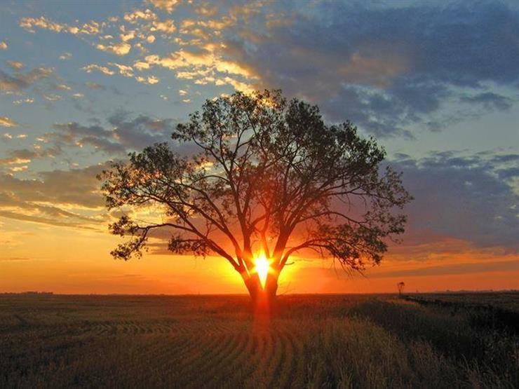 من هو الرجل الذي صارعه النبي وغلبه وأراه الشجرة تمشي؟