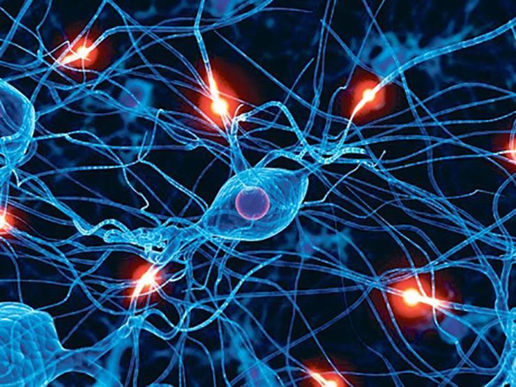 دراسة: كبار السن ينمون أكبر عدد من خلايا الذاكرة كالصغار تماما