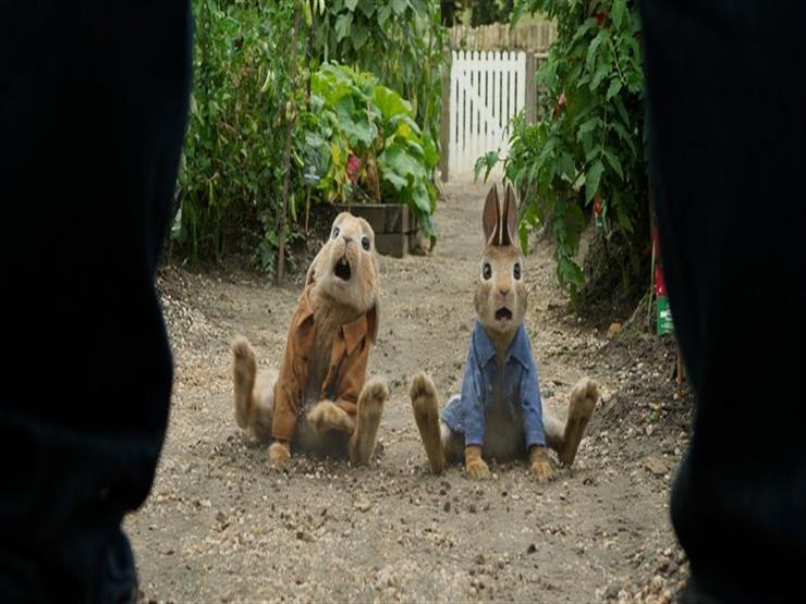 بعد النجاح الكبير لفيلم  Peter Rabbit .. سوني تستعد للجزء ال...مصراوى