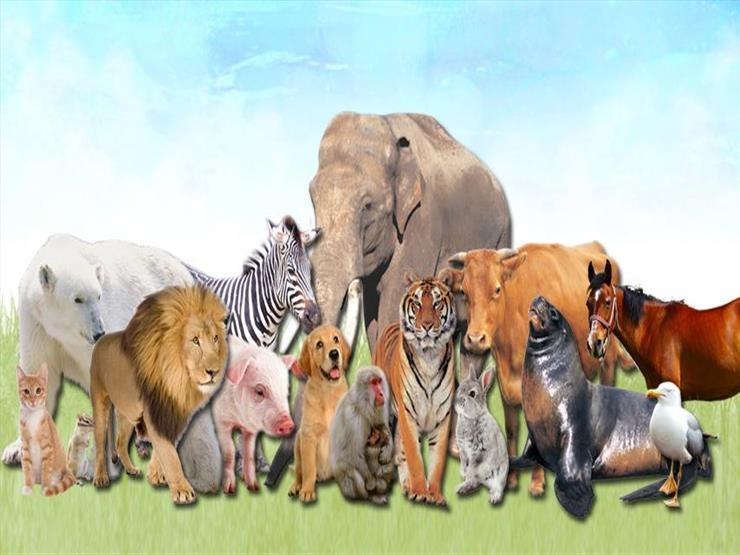 صيام الحيوانات.. تعرف على صيام هذا الحيوان عن الماء والغذاء