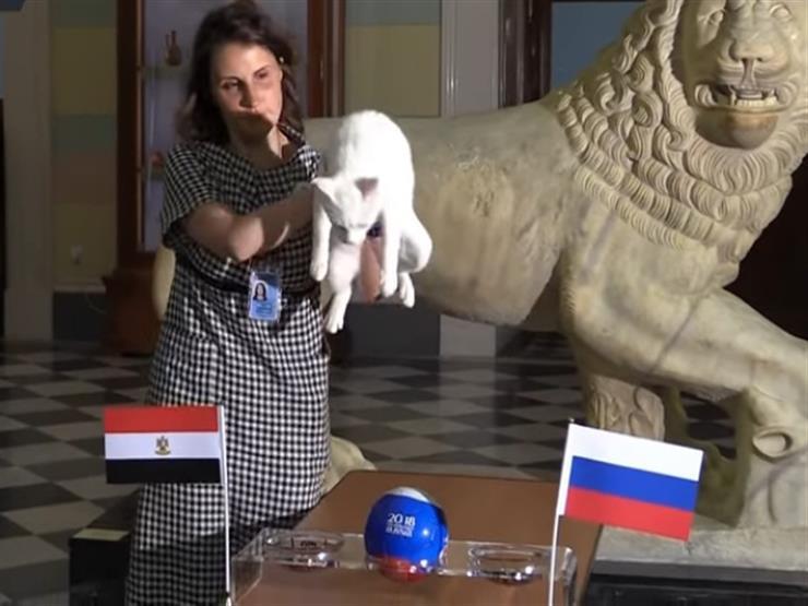 """فيديو  من يفوز في مباراة روسيا ضد مصر؟ القط """"أخيل"""" يتنبأ"""