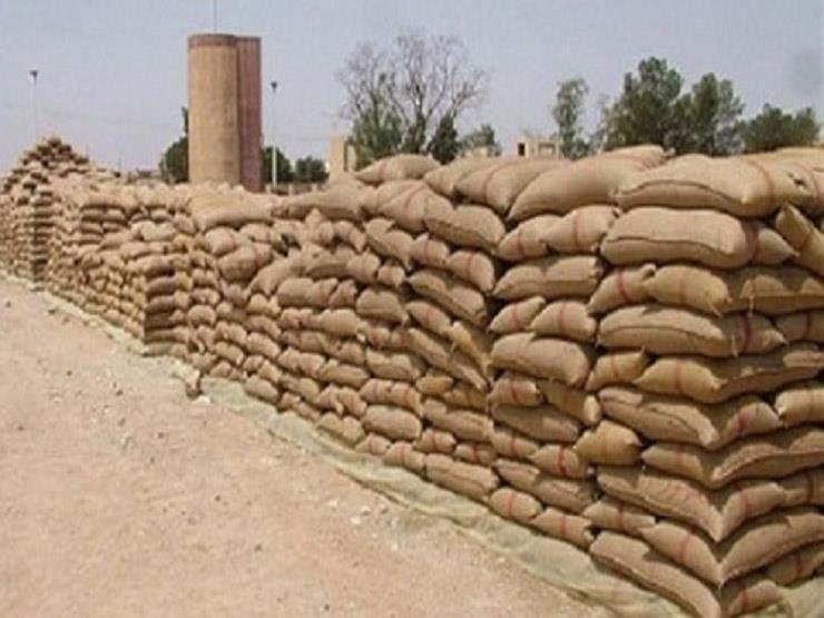 تموين الإسكندرية: كميات توريد القمح من الفلاحين وصلت 56 ألف طن