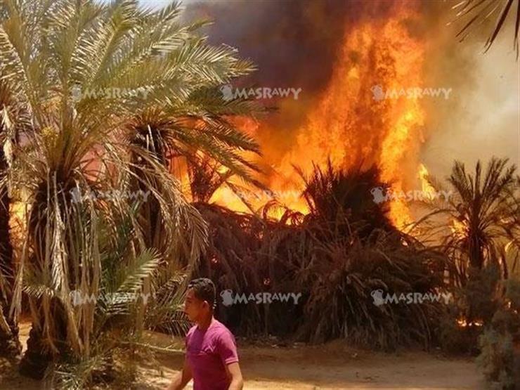 إخماد حريقين بمزارع نخيل  في الداخلة والفرافرة