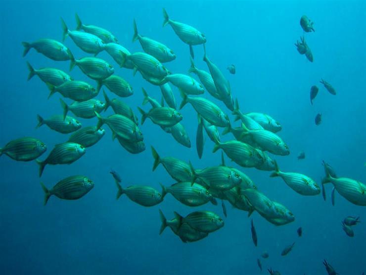 بسبب تحمُّض المياه.. الأسماك تفقد حاسة الشم والقدرة على إيجاد الطعام