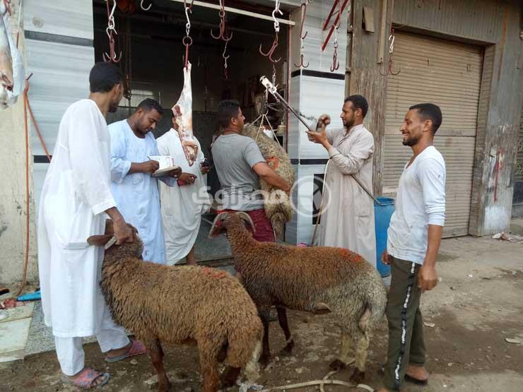 سعر خروف العيد يرتفع 14 والإقبال على الجمال يزداد بسبب الج مصراوى