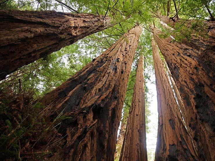وفد كوري جنوبي يتوجه إلى بانمونجوم لمناقشة تعاون الغابات مع شطره الشمالي
