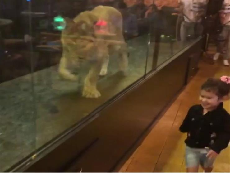 أسد يتجول داخل قفص في مقهى في اسطنبول