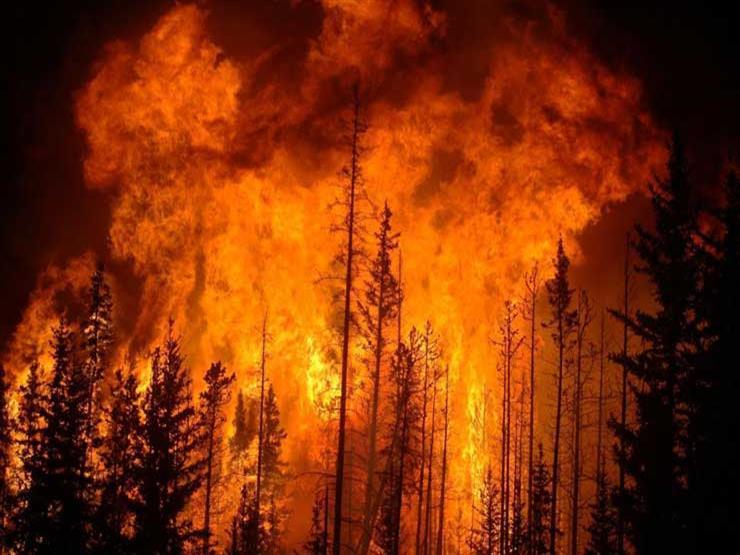 حرائق الغابات تودى بحياة 54 شخصا في جنوب السودان