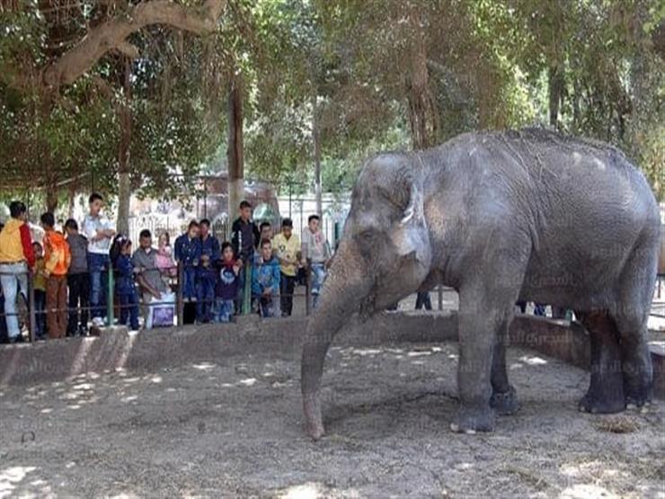 16 ألف زائر لحديقة الحيوان بالجيزة حتى منتصف اليوم