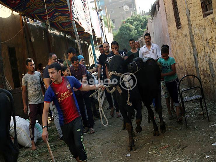 """آخر استعدادات عيد الأضحى في """"المدبح"""" (صور)"""