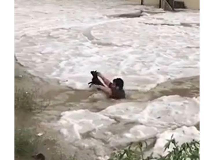 """بالفيديو   شاب سعودي ينقذ """"قطة"""" جرفتها مياه السيول"""
