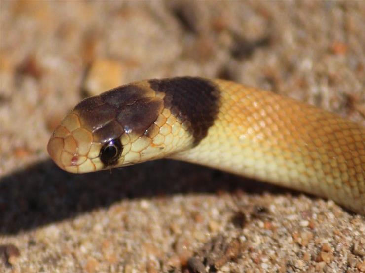 خبير حياة برية يحذر من هجوم للثعابين خلال الموجة الحارة