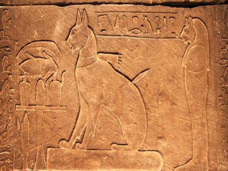 دراسة: ترويض القطط بدأ منذ 10 آلاف عام