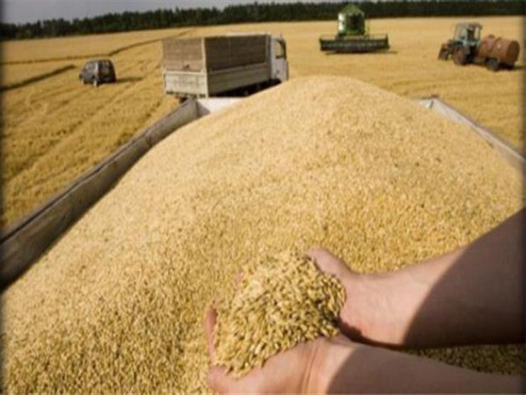 """""""التموين"""" تعلن انتهاء موسم توريد القمح"""