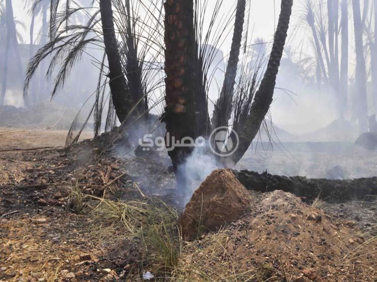 السيطرة علي حريق شب في 25 نخلة بجوار كلية الزراعة بمشتهر