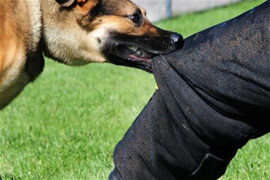 أسطورة الـ21 حقنة.. كم جرعة تُعطى عند التعرض لعضة كلب؟