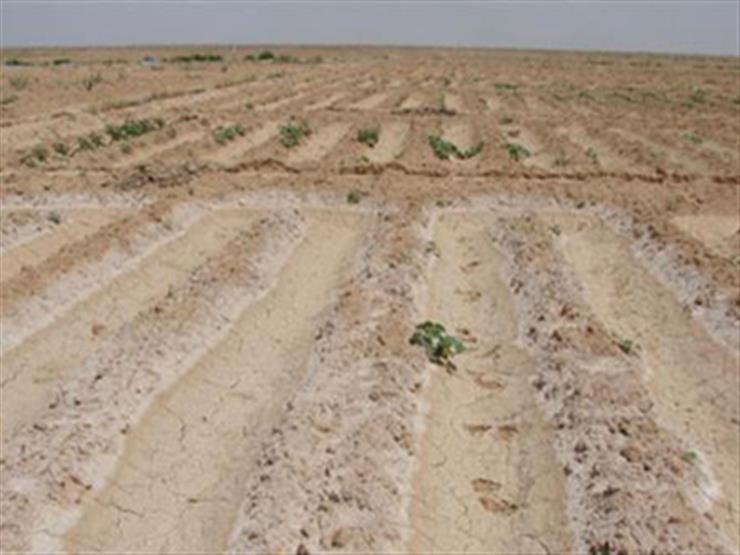 الأحد.. باحثون مصريون يحقنون الرمال لتحويلها إلى أراض خصبة