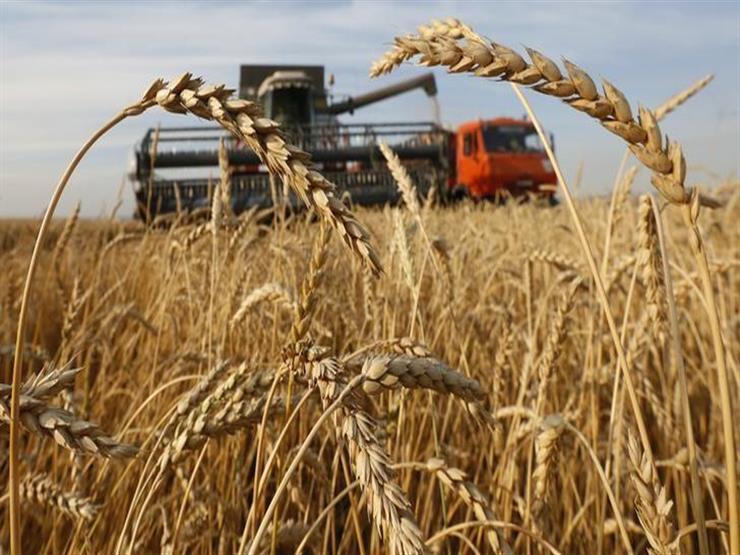 مصدر حكومي: مصر قد تستخدم مليار دولار من تمويل مؤسسة إسلامية لشراء القمح