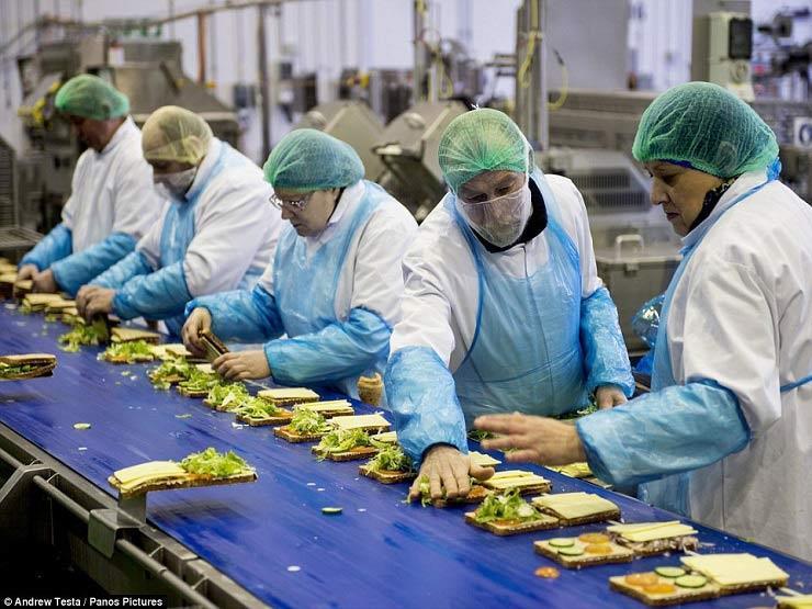 الإحصاء: 13% زيادة بالرقم القياسي لصناعة المنتجات الغذائية في نوفمبر
