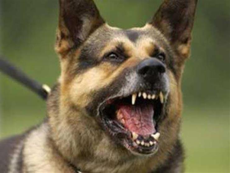 كلب مسعور في الخانكة يهاجم 14 طفلًا ويصيبهم بجروح