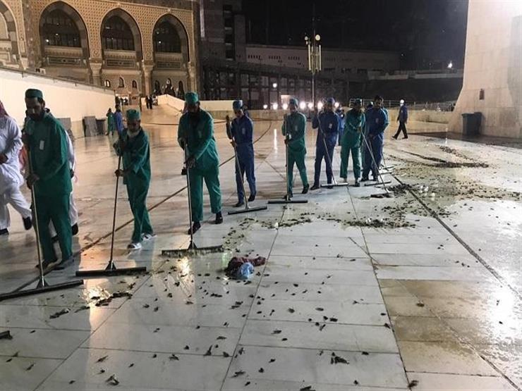 بعد اجتياحها السعودية.. كيف سيكون شكل الحياة إذا اختفت الصراصير عن عالمنا؟