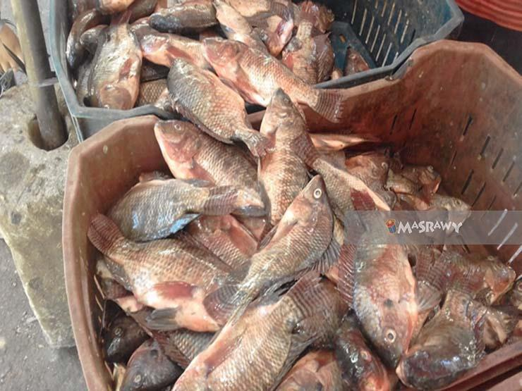 أسعار الأسماك والمأكولات البحرية بسوق العبور خلال تعاملات اليوم