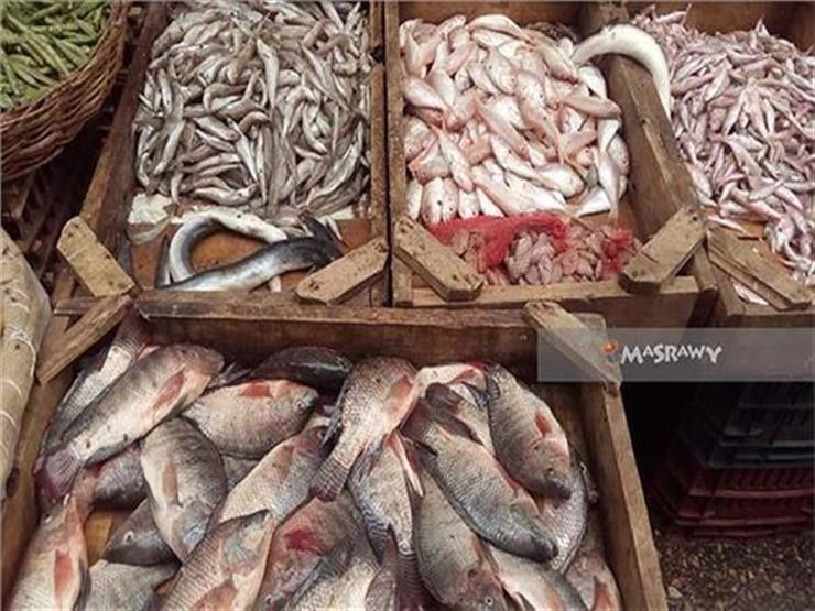 تعرف على أسعار الأسماك في سوق الجملة مع بداية الأسبوع