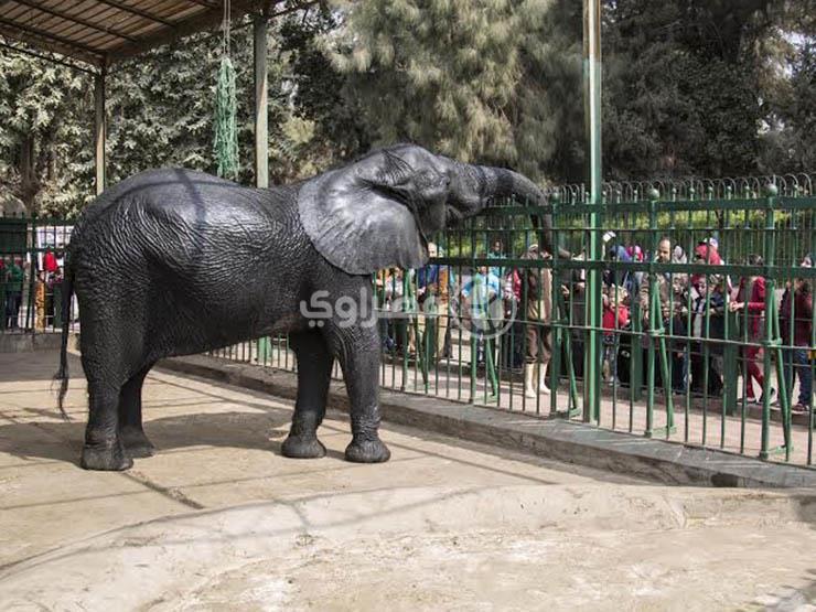 """""""بجلطة في القلب"""".. نفوق """"نعيمة"""" آخر أفيال حديقة حيوان الجيزة """