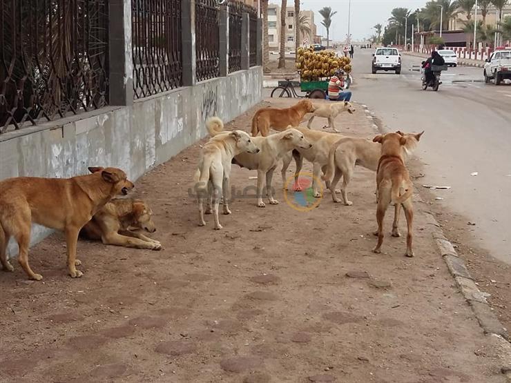 إصابة 6 أشخاص عقرهم كلب ضال في كفر الشيخ