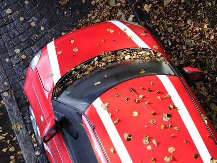 خبراء يحذرون من أضرار بالغة تسببها أوراق الشجر المتساقطة على السيارة