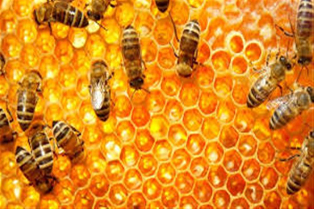 منها عسل البرسيم.. إليك أنواع العسل وفوائده الصحية (صور)