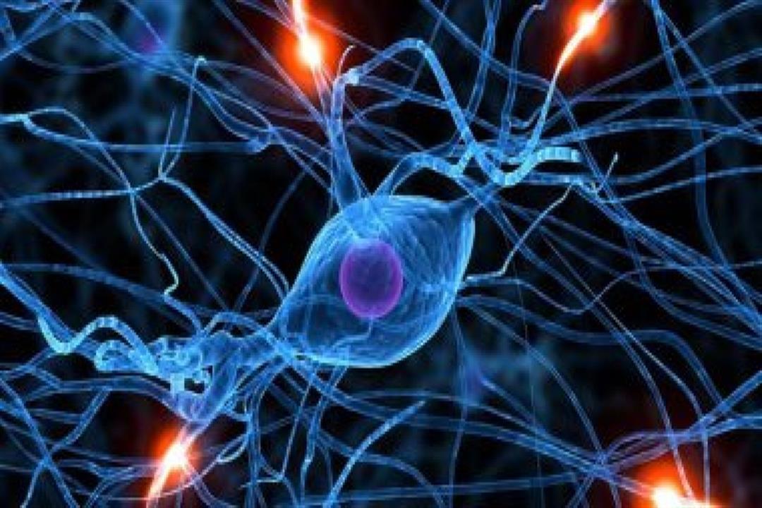 مفيد في علاج السرطان.. تحديد البروتين المتحكم في تجديد الخلايا الجذعية