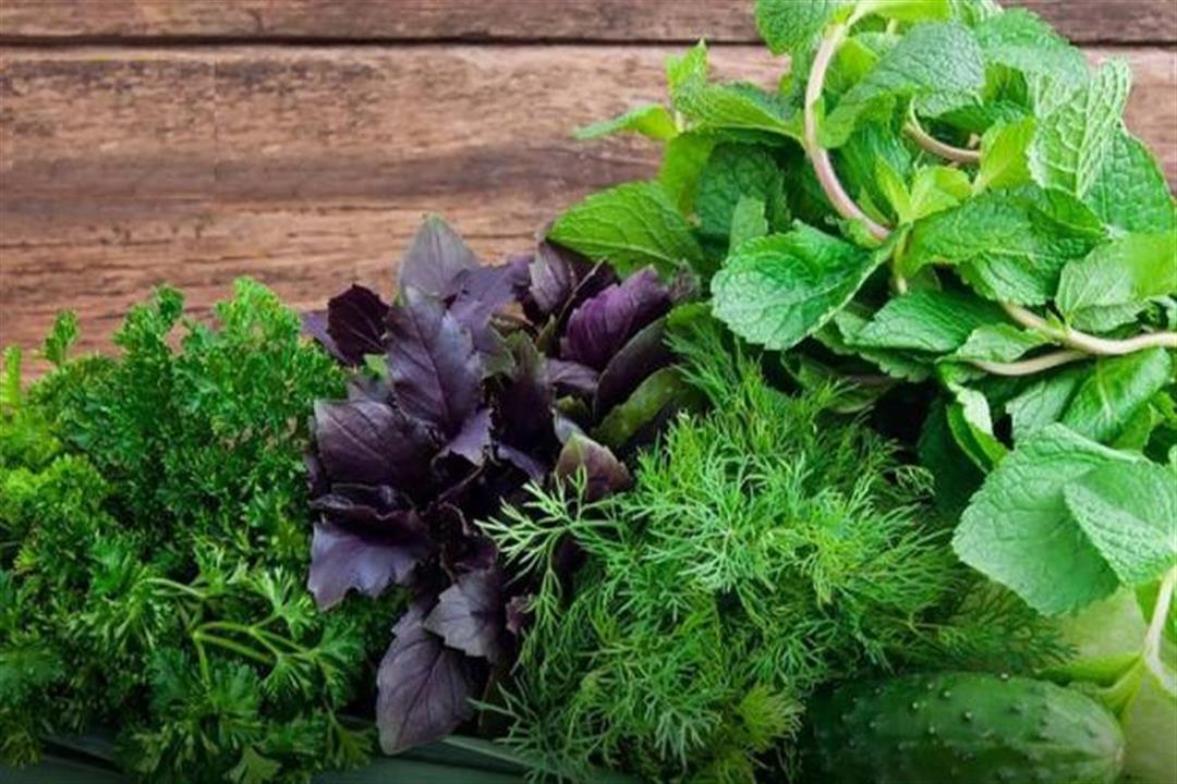 منها فقدان الوزن وتقوية المناعة.. إليكم فوائد الخضروات الورقية