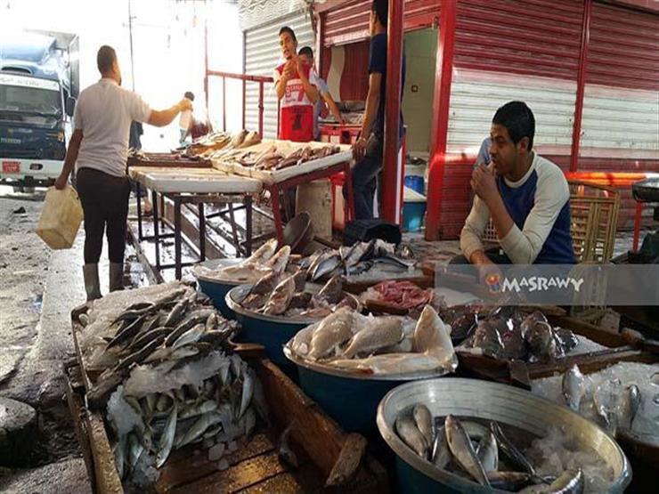 أسعار سمك البلطي والبوري والمكرونة ترتفع في سوق الجملة بالعبور