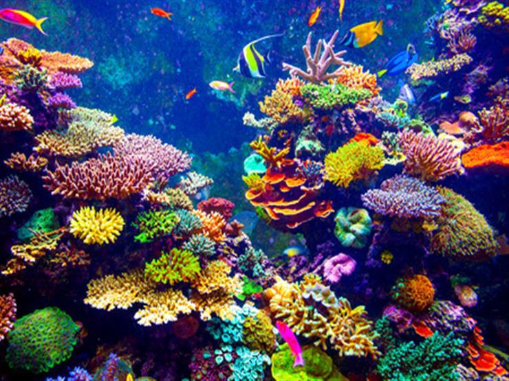 دراسة: الشعب المرجانية في حاجة من9 إلى 12 عاما لتتعافى تماما من الابيضاض